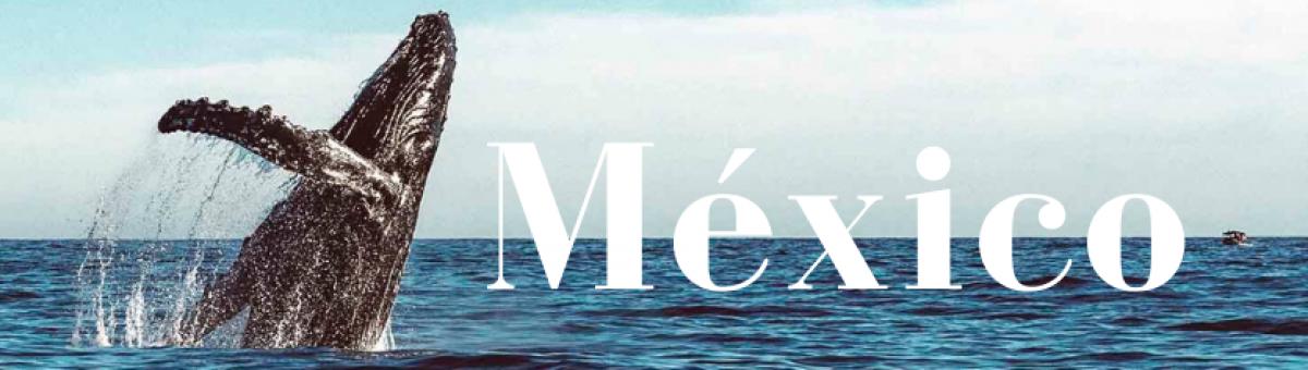 México para el mundo